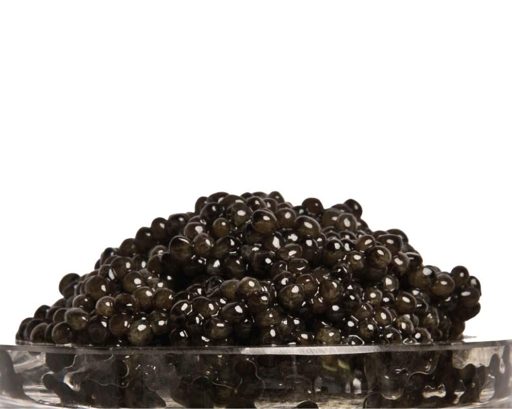 Classic russian ossetra caviar acipenser gueldenstaedtii for Caviar fish eggs