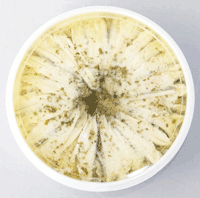 garlic-anchovy-1kg