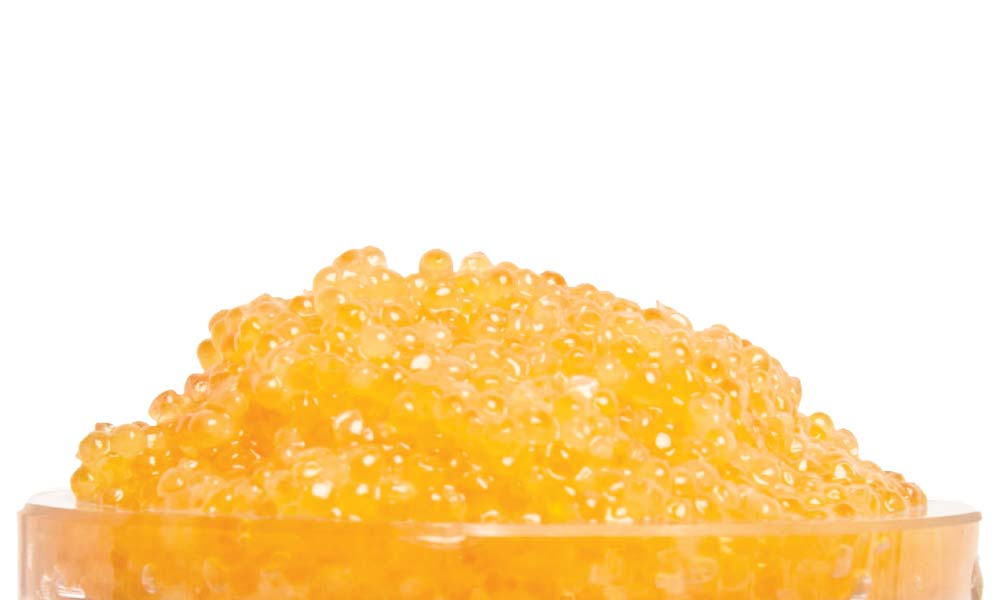Golden Whitefish 