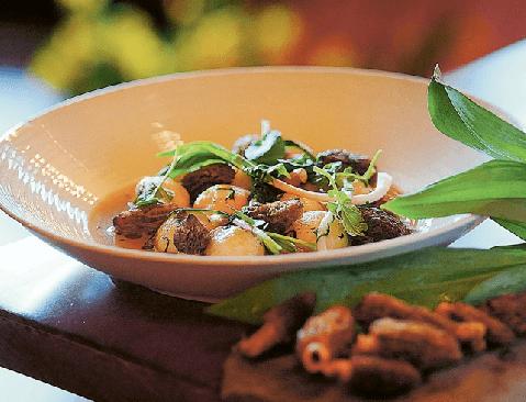 morel mushrooms recipes