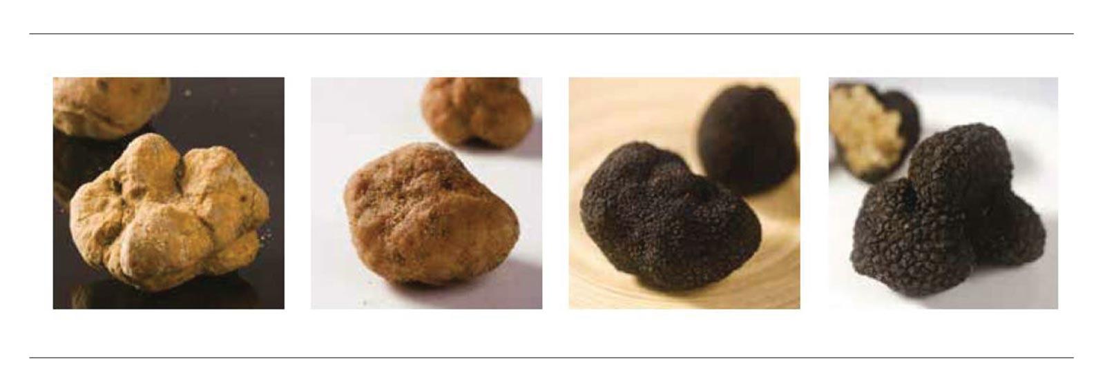 truffle-banner