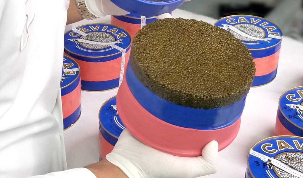 Is caviar expensive or is it just a myth 3 - Caviar Lover
