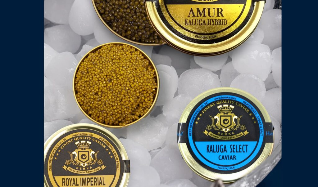 Kaluga Caviar How is it different from other types 4 - Caviar Lover